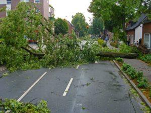 Orkan lässt Bäume auf Straße fallen